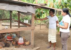 Paola*, a Colombian refugee in Panama, proudly shows off the chicken coop that she built with funds from a HIAS Panama livelihood grant.